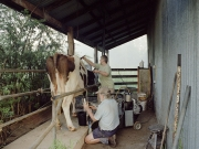 http://janinebaechle.com/files/gimgs/th-24_Robin-and-Graeme-looking-after-the-cows.jpg