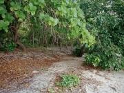 http://janinebaechle.com/files/gimgs/th-30_09-Fitzroy-Island.jpg