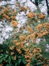 http://janinebaechle.com/files/gimgs/th-34_15g-Orangene-Beeren.jpg